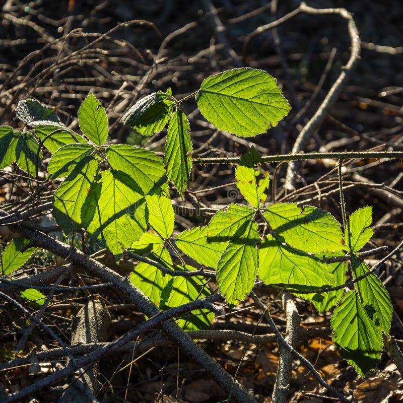 Em uma floresta - folha impressionante no luminoso imagem de stock royalty free