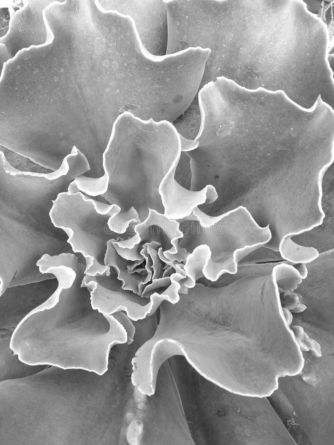 Em uma planta carnuda imagem de stock