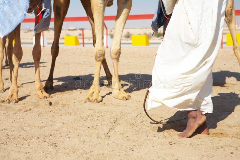 Emballage de chameau de robot photographie stock