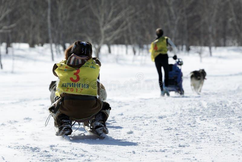 Emballage de chien de traîneau du Kamtchatka Beringia, tasse russe de disciplines de neige d'emballage de chien de traîneau photo libre de droits