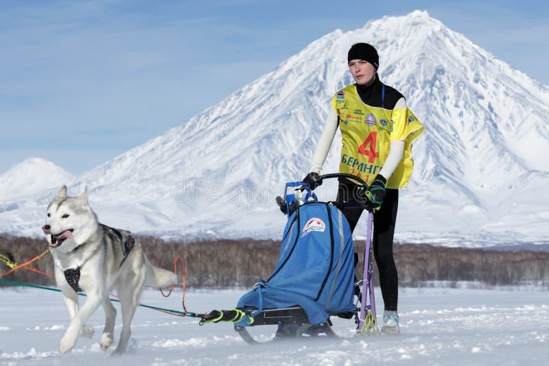 Emballage de chien de traîneau du Kamtchatka Beringia, tasse russe de disciplines de neige d'emballage de chien de traîneau photo stock
