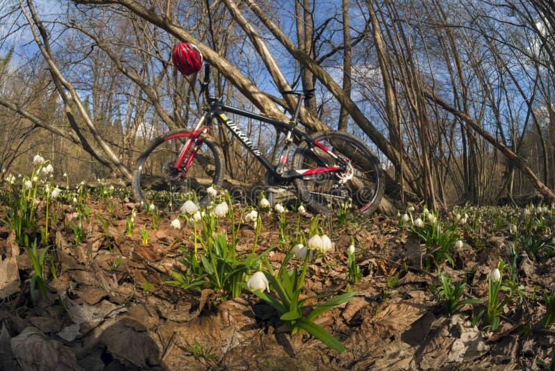 Emballage du vélo Ukraine de carbone et des perce-neige images libres de droits