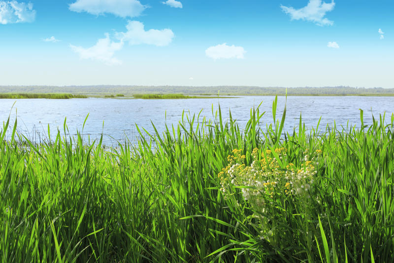 Embankment grass near the water on a sunny day. Landscape wetlands. Embankment grass near the water on a sunny day royalty free stock photos