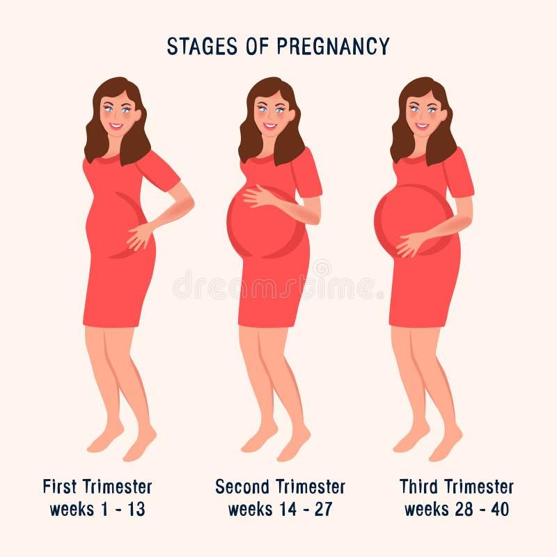 Embarazada en los momentos diferentes Trimestre del embarazo Ejemplo del vector de la maternidad, parto, esperando a un beb? libre illustration