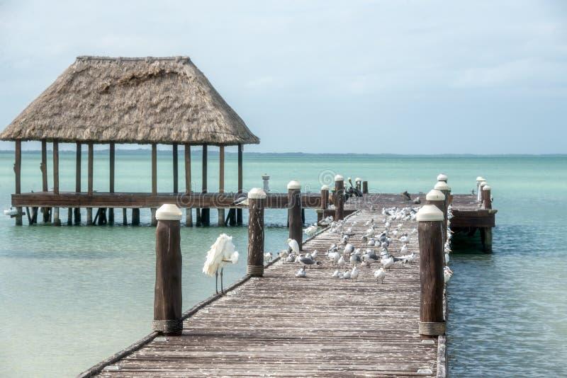 Embarcadero de madera y de la choza de Palapa con los segals y los pájaros Holbox, Tropica foto de archivo