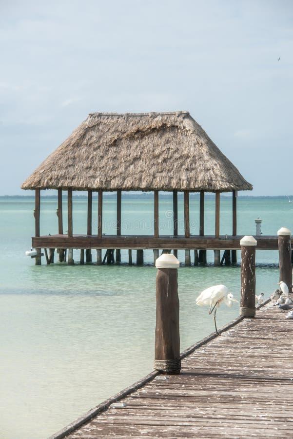 Embarcadero de madera y de la choza de Palapa con los segals y los pájaros Holbox, Tropica imagen de archivo libre de regalías