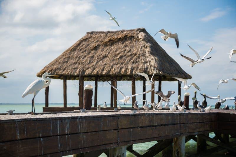 Embarcadero de madera y de la choza de Palapa con los segals y los pájaros Holbox, Tropica fotografía de archivo