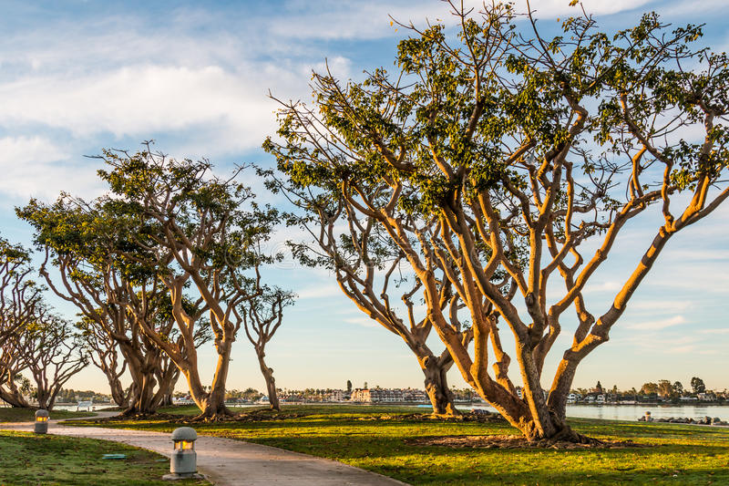 Embarcadero parkerar den norr banan med Coral Trees royaltyfri foto