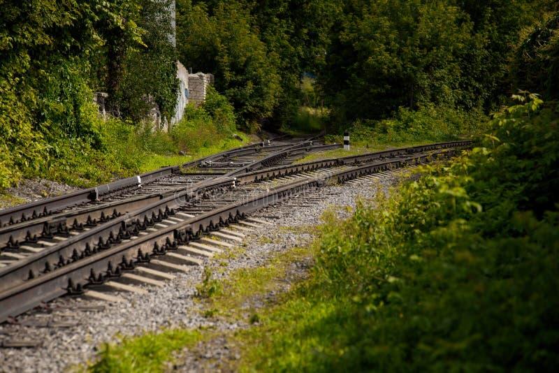 Embarquer dans les voies ferrées Les rails rouillés du chemin de fer et les traverses en bois pourri sont surpeuplés de raisins v photographie stock libre de droits