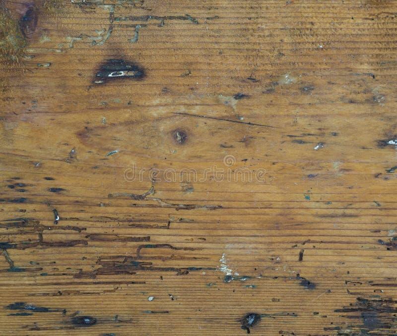 Embarquez le bois dur orange avec des steines de peinture de chemin de ver de bois photographie stock libre de droits
