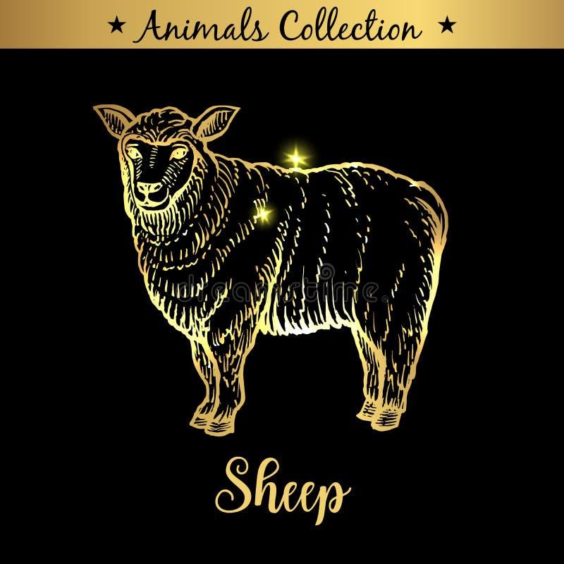 Emblema disegnato a mano dorato e reale dell'animale delle pecore dell'azienda agricola Negozio che marca a caldo, prodotti a bas illustrazione vettoriale