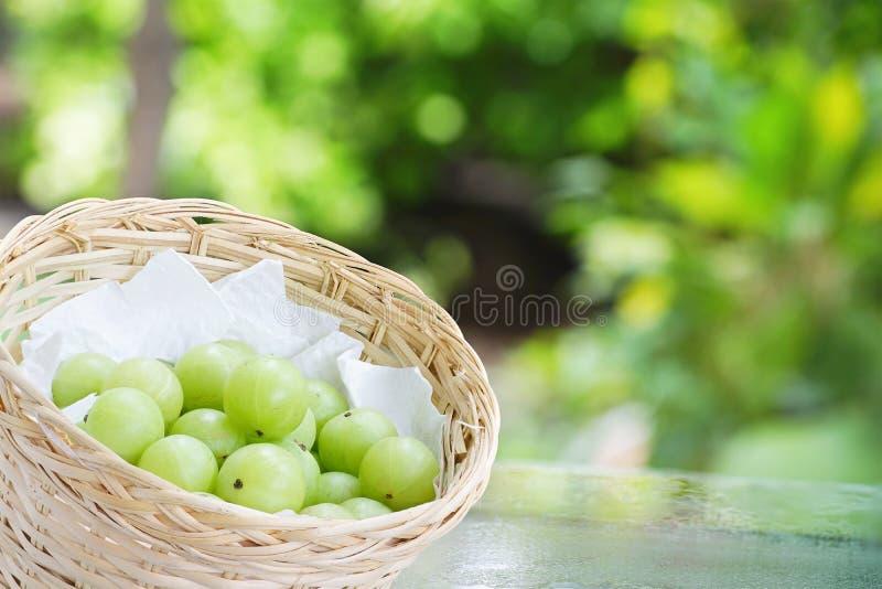 Emblica, amla grüne Früchte lizenzfreie stockbilder