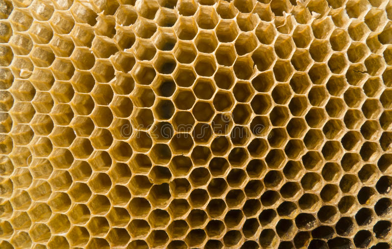 Emboîtement d'abeille photo stock