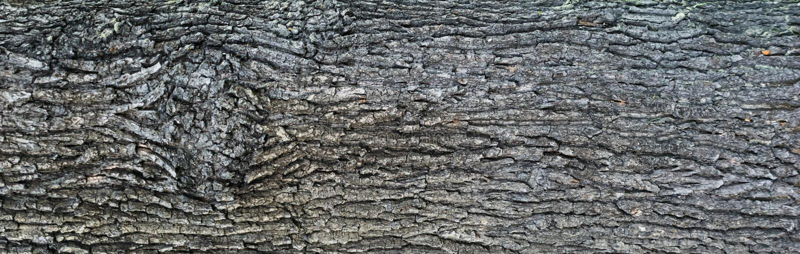 Embossed tekstura barkentyna d?b zdjęcia royalty free