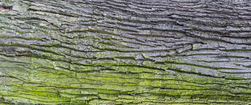Embossed tekstura barkentyna d?b fotografia royalty free