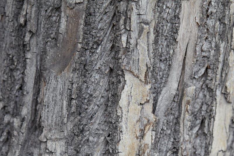 Embossed tekstura popielata barkentyna drzewo fotografia stock