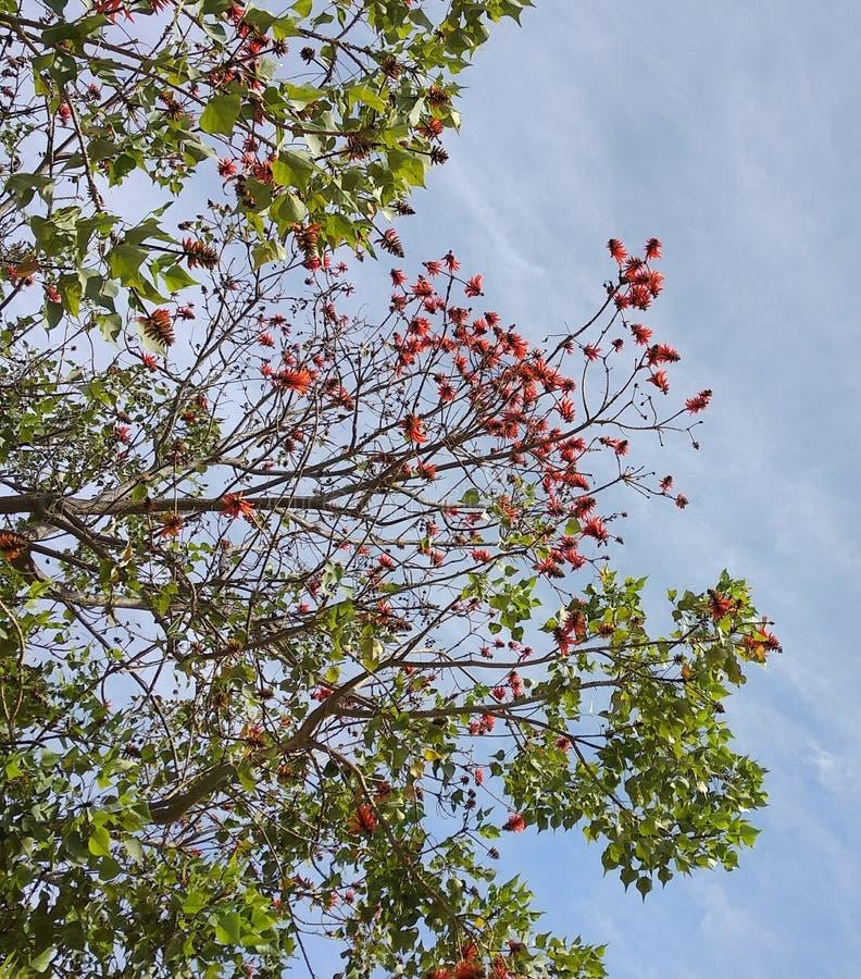 embranchement d'arbre photos libres de droits
