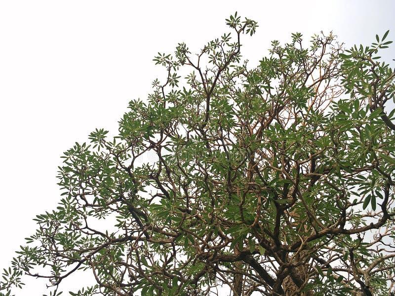 Embranchement de l'arbre photos stock
