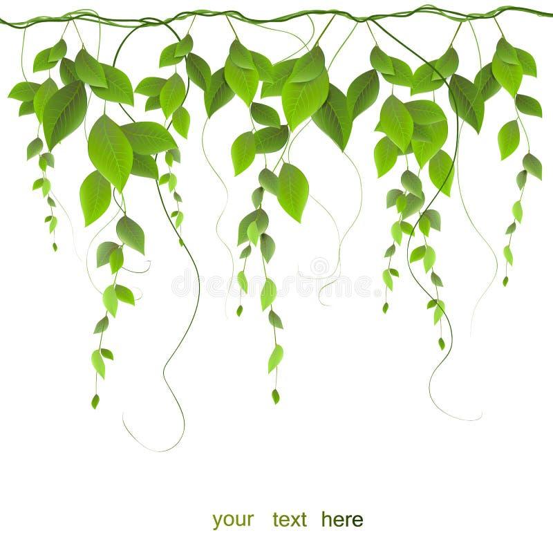 Embranchez-vous avec des feuilles d'isolement sur le fond blanc illustration stock