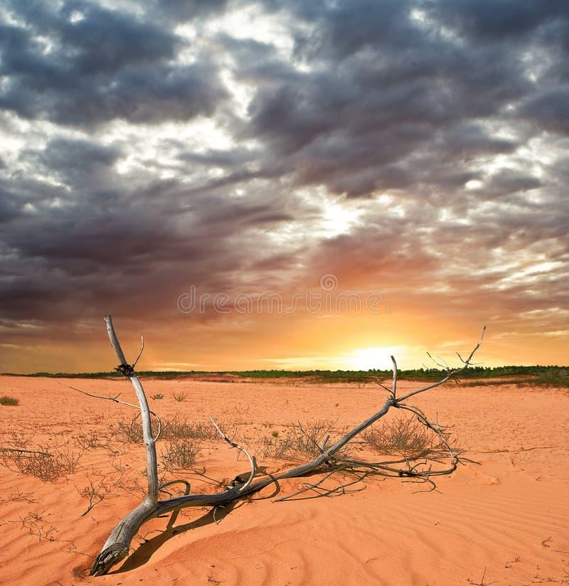 Embranchez-vous dans un désert photos stock