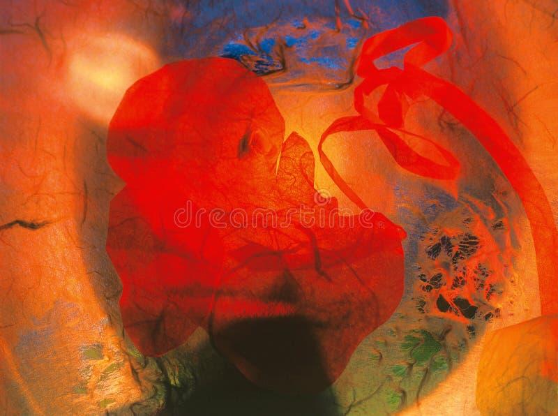 Embrião bonito fotografia de stock