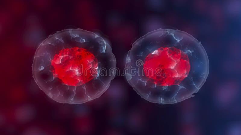 Embrionalne kom?rki macierzyste, przyrost, rehabilitacja lub traktowanie choroby, 3D ilustracje ilustracja wektor
