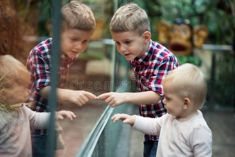 Embroma reptiles de observación en terrario a través del vidrio foto de archivo
