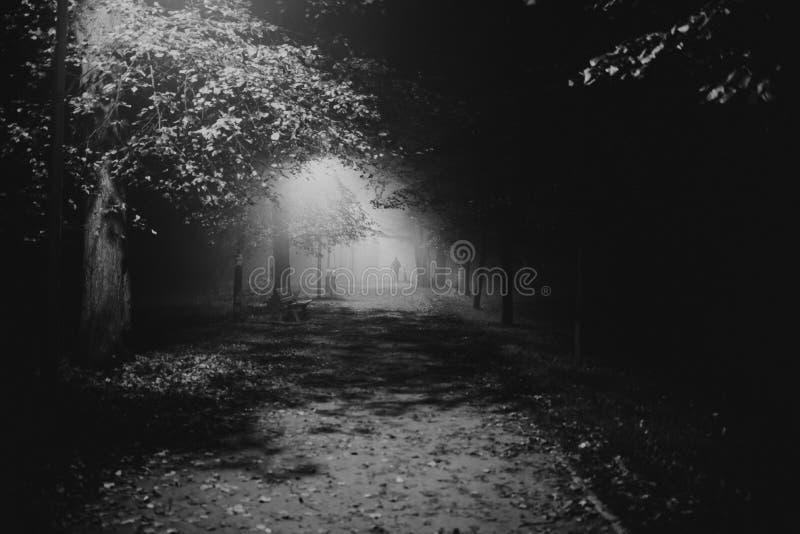 Embrumez en parc, nuit, le foyer mou, OIN élevée, noire et blanche images libres de droits