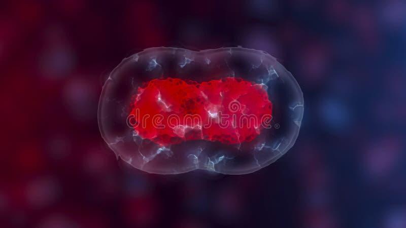 Embryonale Stammzellen oder Wachstum, Rehabilitation und Behandlung von Krankheiten, Illustrationen 3D vektor abbildung