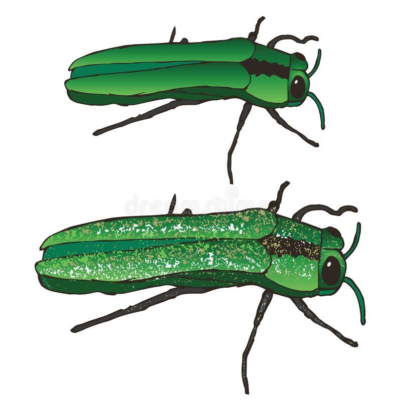 Emerald Ash Borer illustration de vecteur