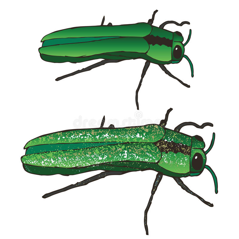 Emerald Ash Borer vector illustration