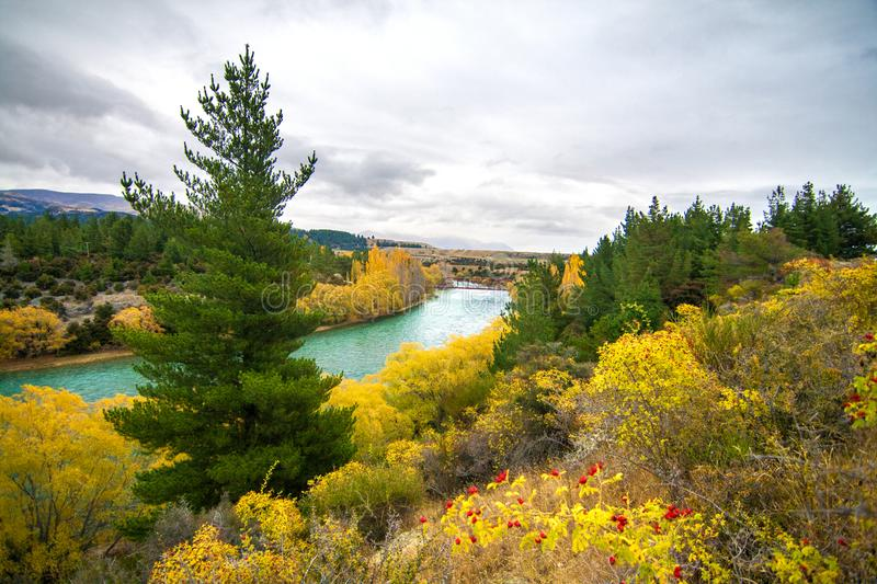 Colourful autumn landscape with emerald blue river, trees with yellow leaves and pine trees, Clutha River New Zealand royalty free stock photography