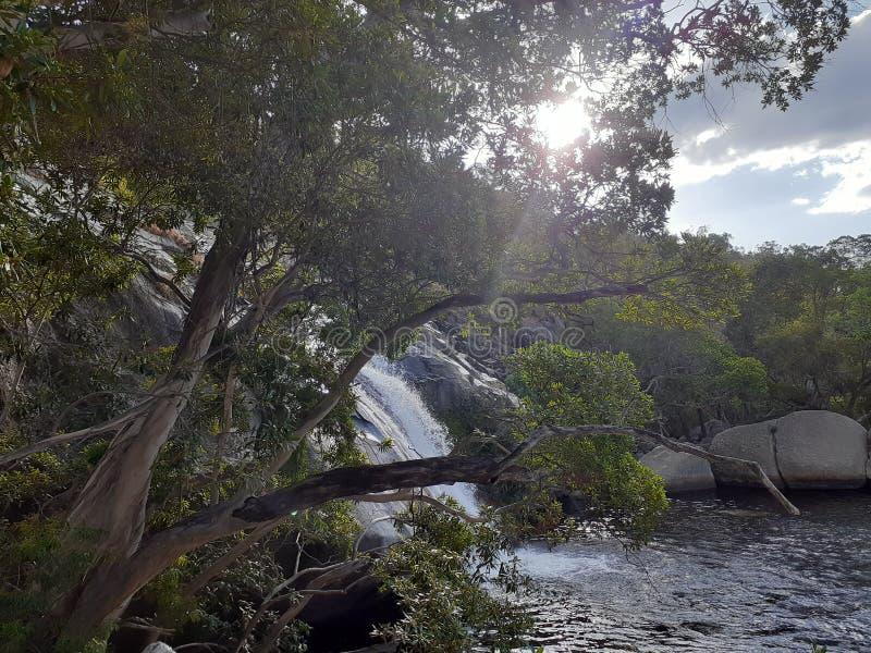Emerald Creek Australia, boomaard royalty-vrije stock foto
