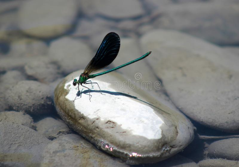 Emerald dragonfly on white stones royalty free stock images