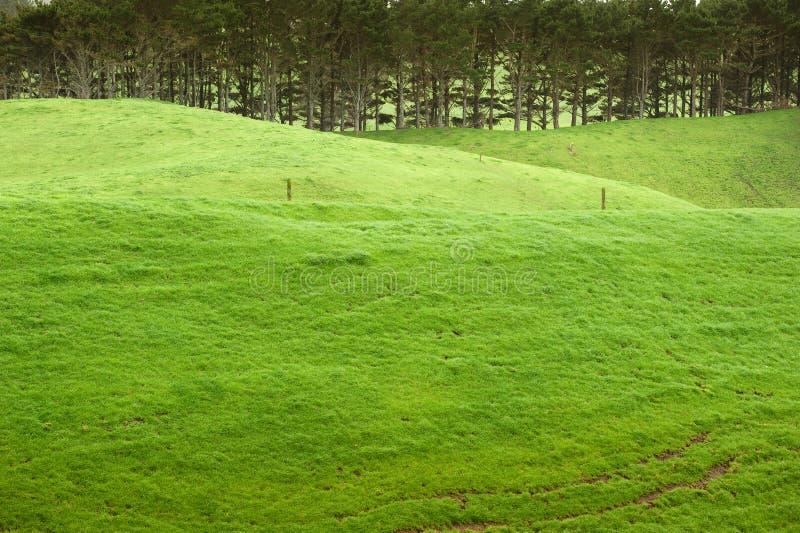 Emerald farmland. WS: Lush emerald green grass on the rolling farmland of clean green New Zealand stock photo