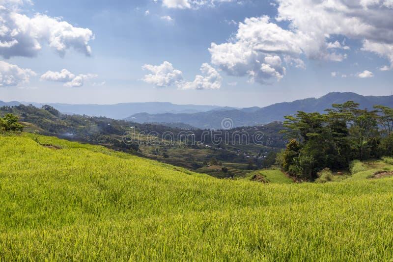 Emerald Flores Rice Terrace imagem de stock royalty free