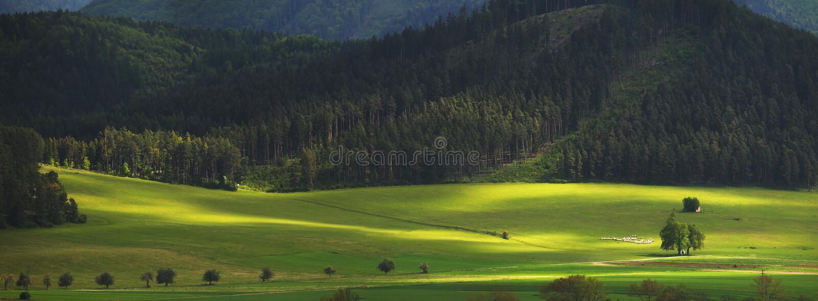 Emerald grass in valley. Green meadow on sunny day. Emerald grass in valley in bright day light. Beautiful summer background stock image