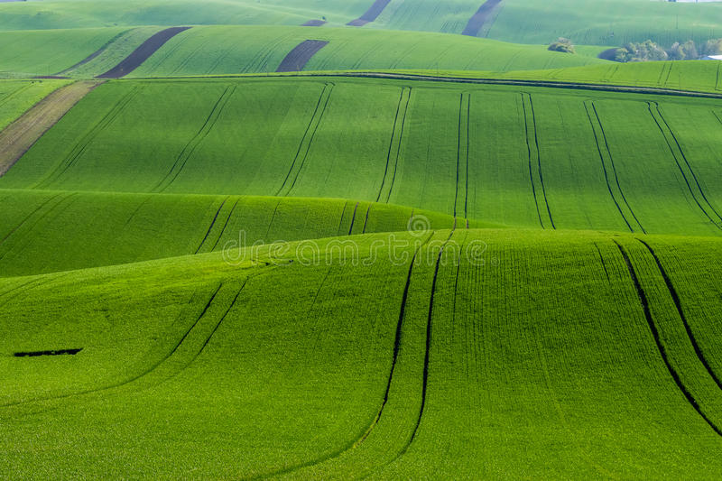 Emerald Green Agricultural Field images libres de droits