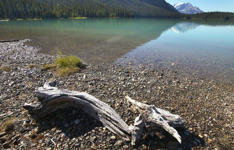 Emerald lake landscape with dead trunk. British Columbia. Canada stock photos