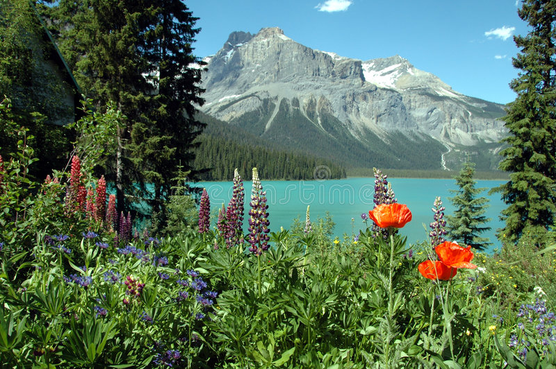 Download Emerald lake in summer stock photo. Image of flowers, view - 2865714