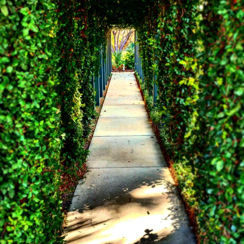 Emerald passage. A photo rich in different Hues of green of an ivy overgrown pathway with a central Focus and additional tasteful Shadows royalty free stock images