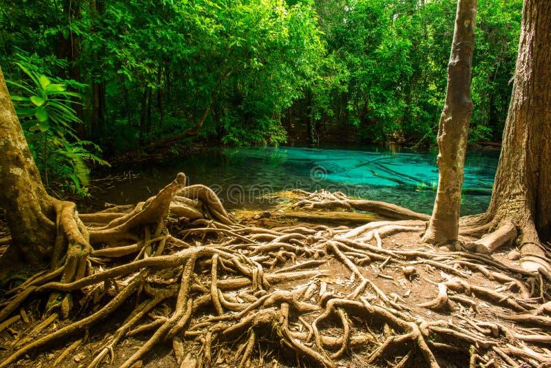 Emerald Pool imagen de archivo libre de regalías
