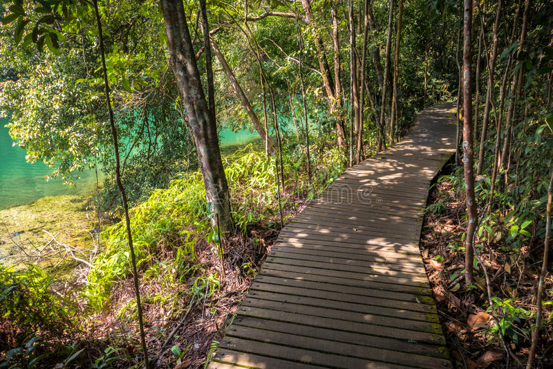 Emerald Water e trajeto da selva imagem de stock royalty free