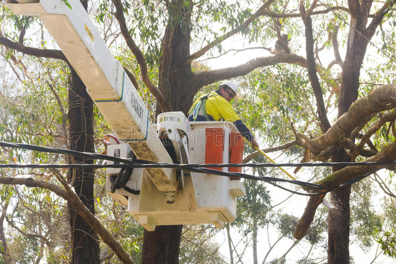 Emergency services cutting through a tree in the Adelaide Hills. Adelaide Hills, South Australia - October 4, 2016: Emergency services cut through a tree that stock photography