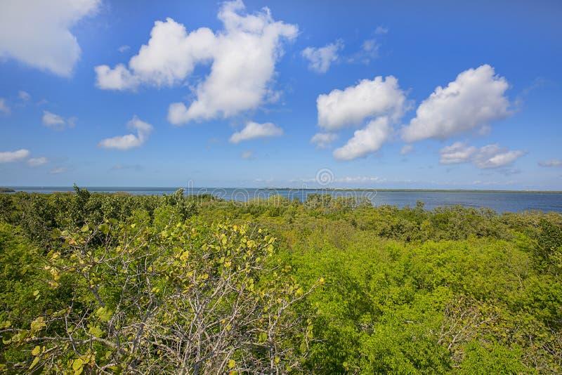 Emerson Point Preserve High View des Horizontes über dem Golf von Mexiko lizenzfreie stockbilder