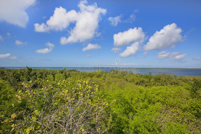 Emerson Point Preserve High View Of Horizon Over The Gulf of Mexico royalty free stock images
