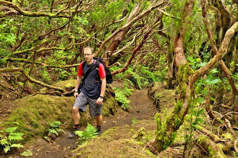Emigre en el bosque salvaje en las montañas de Anaga, Tenerife imágenes de archivo libres de regalías