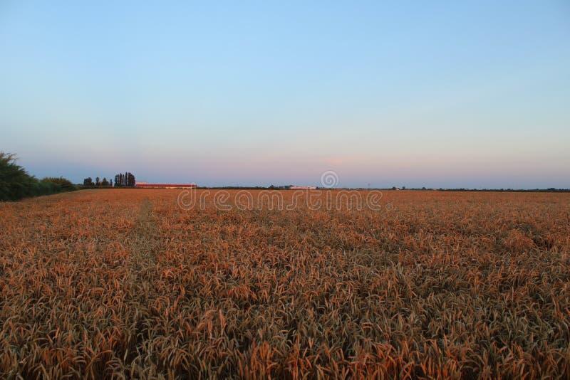 Emilia Romagna-Landschaft nach Sonnenuntergang stockfotos