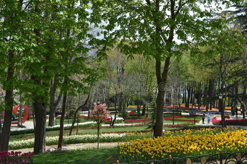 Emirgan-Park in Istanbul, bunte Tulpen in Emirgan-Park stockbild