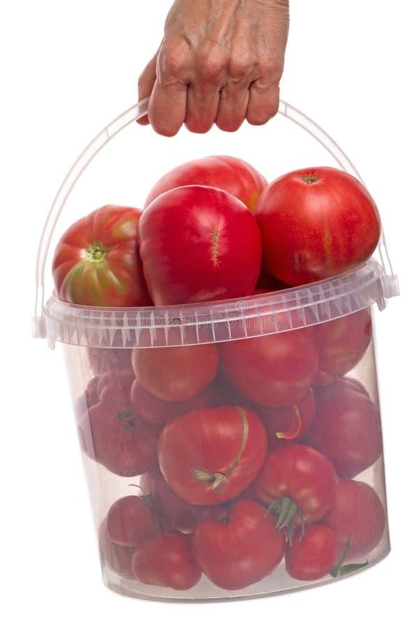 Emmer met in hand tomaten stock afbeelding